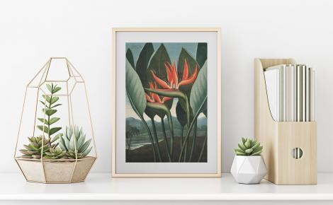 Plakat retro - kwiat Strelicja królewska