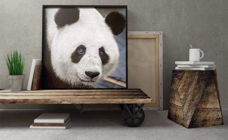 Plakat z pandą do salonu