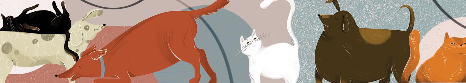 Plakat zwierzaki cudaki