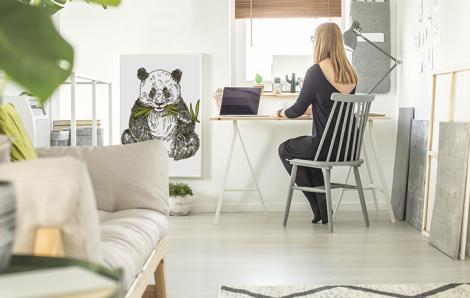 Plakat zwierzę do biura