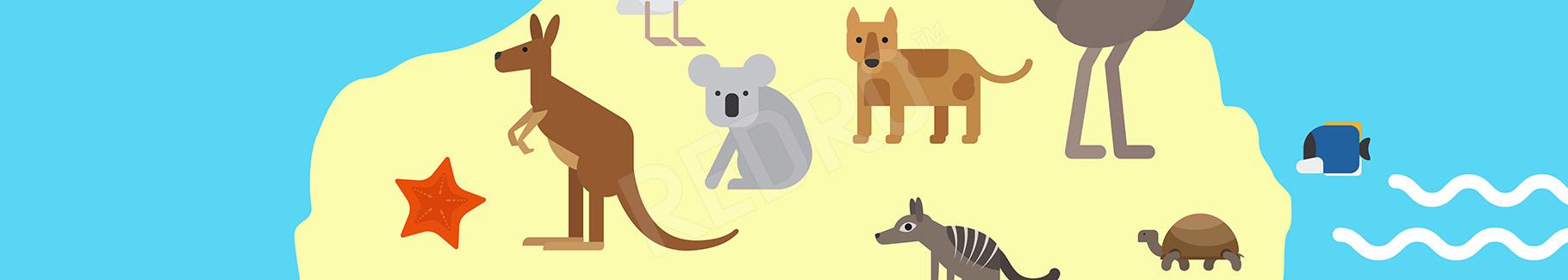 Plakat zwierzęta Australii