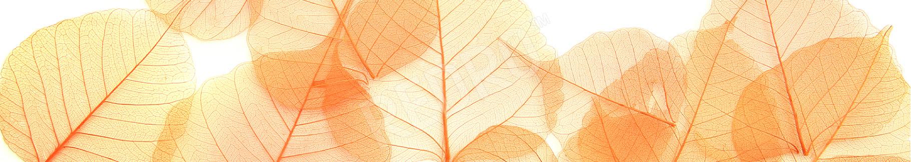 Plakat jesienne liście